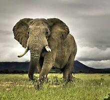 Elephant by ArtItaly