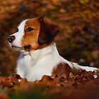 autumn glory by Janneke Broeksteeg