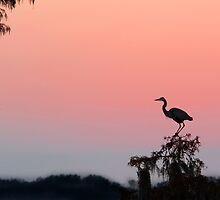 Great Blue Heron Silhouette at Sunset by Bonnie T.  Barry