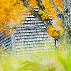 Old Warehouse With Fall Colours by pturner