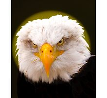 Attitude ! what do you mean ! by Dave  Knowles