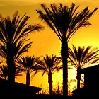 Silhouettes of Palm by Stephen Forbes