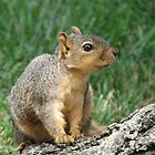 Squirrel II by KBdigital