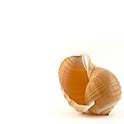 Seashell by Alyeska