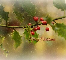 Christmas Holly` by Southernlass