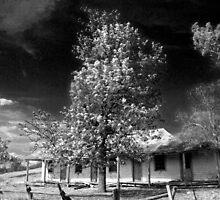 Nestled Amongst The Trees by rossco