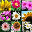 Flower Mosaic by xPressiveImages