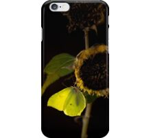 Impression with dried sunflower iPhone Case/Skin