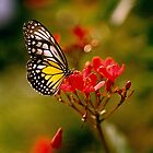 Delias Baracasa Butterfly by Marylou Badeaux