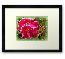 Frosted Rose Framed Print