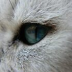 Cat's Eye by fenster