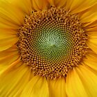 Sunflower by theonlyjill