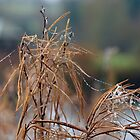 Even the Withered Bracken gets Decorated...... by lynn carter