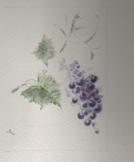 A great red grape Gamay by irene garratt