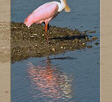 Roseate Spoonbill Reflections Card by Delores Knowles