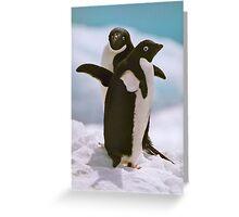Adelies on ice Greeting Card