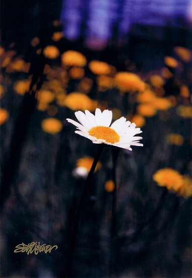 A Daisy Alone by Seth  Weaver