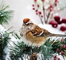 Winter Sparrow by Christina Rollo