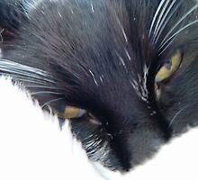 Soft Kitty by Crockpot