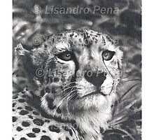 Cheetah Pencil Drawing by onlypencil