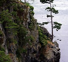 Deception Pass Tree by Rick Lawler