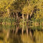 Autumn reflections in water by Pixie Copley LRPS