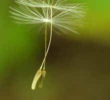 Seeds of Peace by NicoleBPhotos