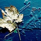 Late Autumn Leaf on ice by daimonic