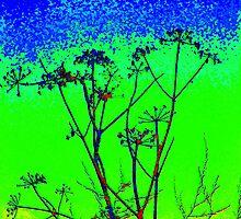 Lovage at Sunrise by Pauline Jones