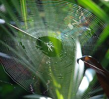 That's a spider-web, man by Albert1000