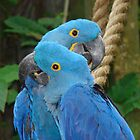 Macaw parrot by Albert1000