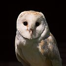 Barn Owl Portrait by SWEEPER