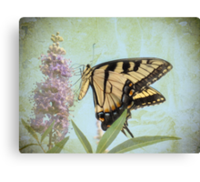 Butterfly Dream Canvas Print