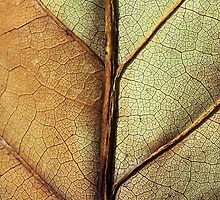 Leaf Veins by xPressiveImages