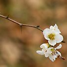 White Flower by photomama4