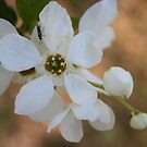 White Flower Little Bug by photomama4