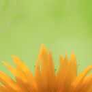 Yellow Feathers by photomama4