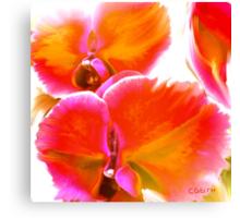 Orchids Ablaze Canvas Print