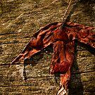 Burnt Leaf by Sherstin Schwartz
