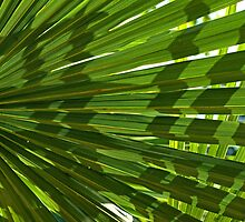 Palm Leaves by EricHands