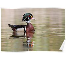 Silky Waters - Wood Duck Poster