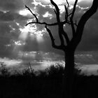 Dramatic Tree Landscape - B&W by Gerry Van der Walt