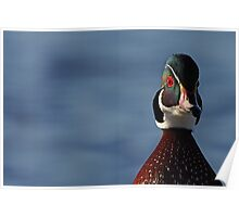 Morning Wood - Wood Duck Poster