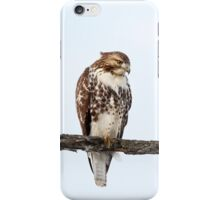 Red-tailed Hawk - Perched iPhone Case/Skin