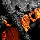 Sunflower by Deon de Lange