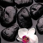 Orchid by Deon de Lange