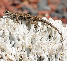 Western Fence Lizard by Eyal Nahmias
