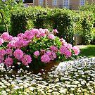 A Pot Of Pink Perfection..........................Mallorca by Fara