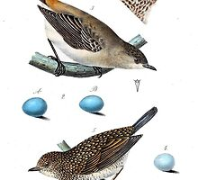 Thrushes With Eggs by Vintagee