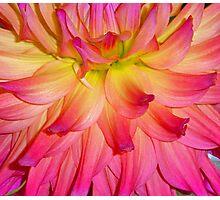 Purple-ish Petals Photographic Print